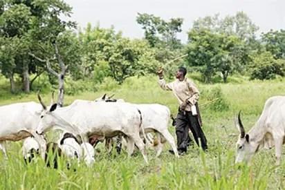 Group asks militant herdsmen to leave Southwest