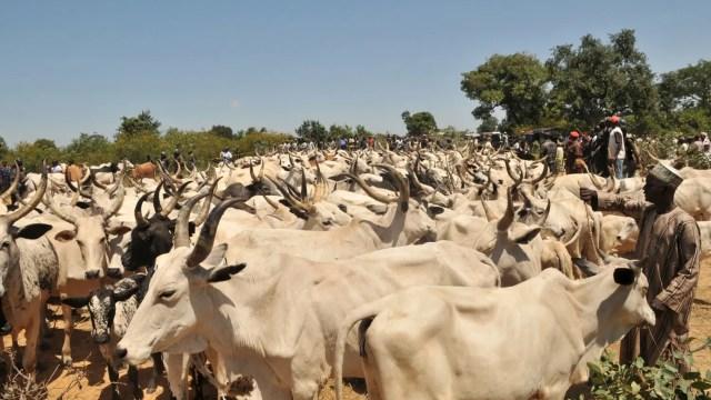 fulani, Herdsmen, Ruga