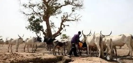 RUGA as the new oil field?