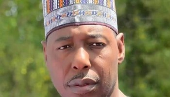 Borno: Zulum secures FGC admissions for 959 out-of-school girls, boys