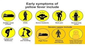 Yellow fever: Gombe confirms three cases, says source traced to Yankari in Bauchi