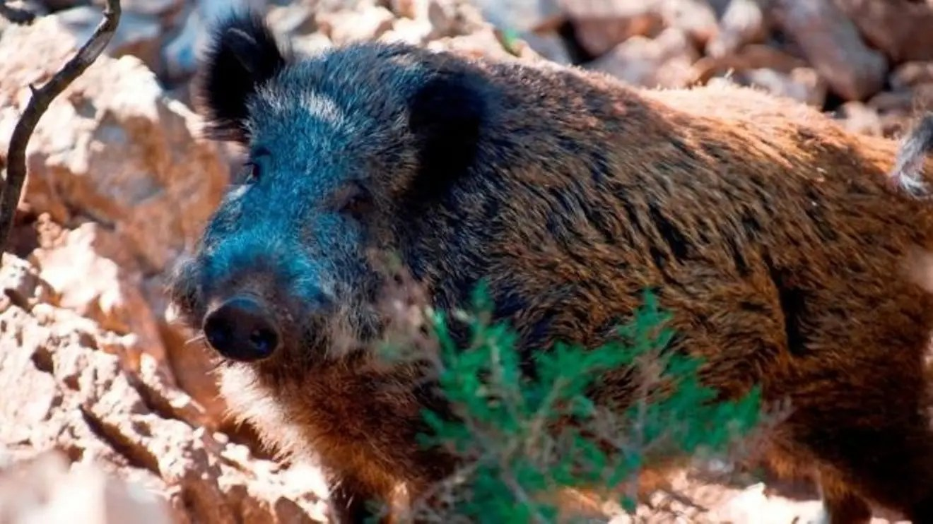 Italian man shoots dad dead after mistaking him for boar