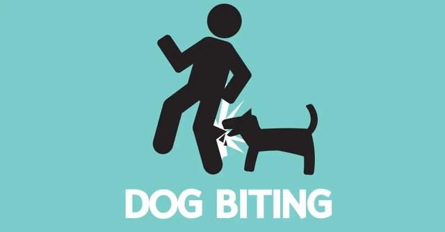 World Rabies Day: NGO advises on dog training