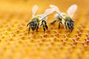 NGO promises to empower farmers on Bee farming