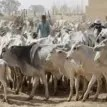 Tension grips Ibadan residents over alleged influx of foreign herders