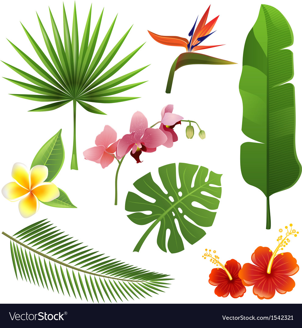 Tropical Plants Royalty Free Vector Image VectorStock