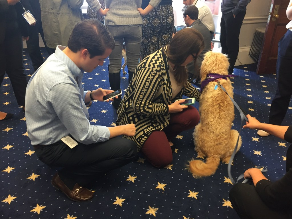 Cleo sits by while staffers look at their phones. (Alex Gangitano/ CQ Roll Call)