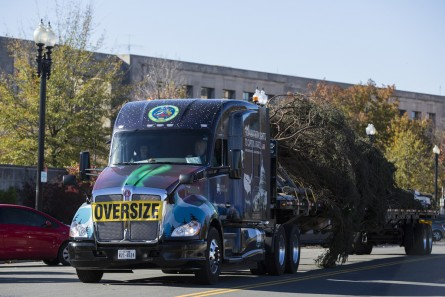 UNITED STATES - NOVEMBER 20 - Driver John Schank, from Fairbanks, Alaska, transports the U.S. Capitol Christmas Tree to the West Front of the Capitol in Washington, Friday, November 20, 2015. The 74-foot Lutz Spruce tree is from the Chugach National Forest in Alaska. (Photo By Al Drago/CQ Roll Call)