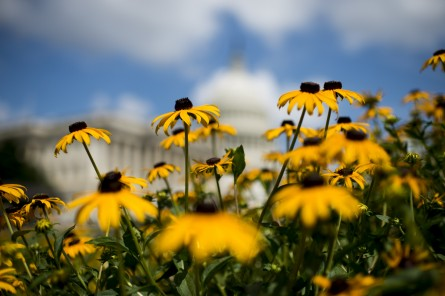When was the last time you stopped to smell the flowers? (Bill Clark/CQ Roll Call)