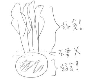紅菜頭解剖圖