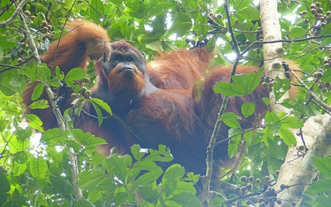 viaje-solo-en-bicicleta-orangutan