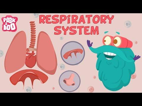 呼吸系統 (Respiratory System | The Dr. Binocs Show | Learn Videos For Kids) - VoiceTube《看影片學英語》