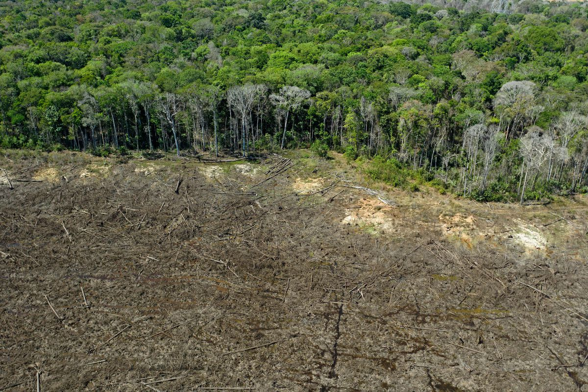Another example is pollinating wasps that eat from different fig species. Jair Bolsonaro Is Asking For Billions To Stop Amazon Deforestation Vox