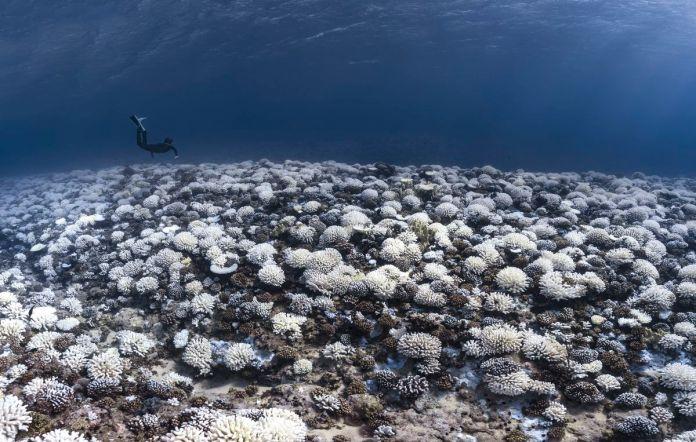Recifes de corais e morte branca