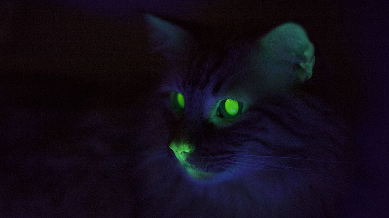 Where Cats Glow Green Weird Feline Science In New Orleans