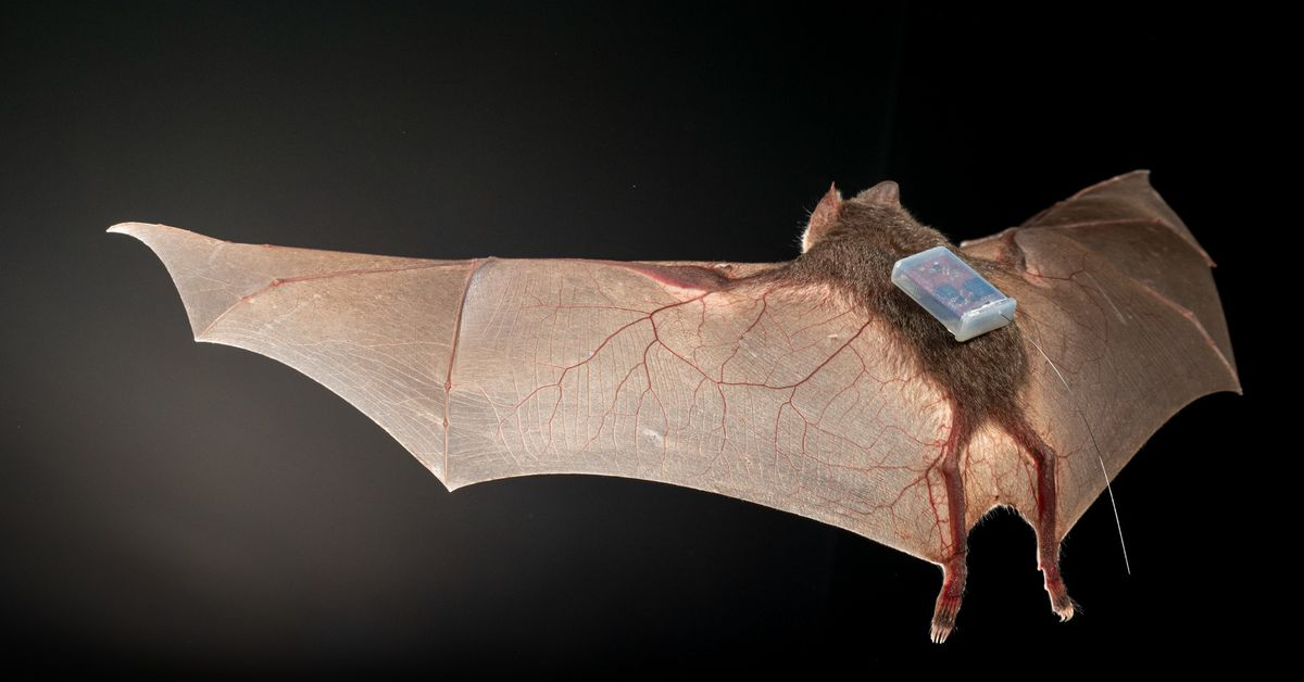 Today I learned bats are trendsetters in tracking tech