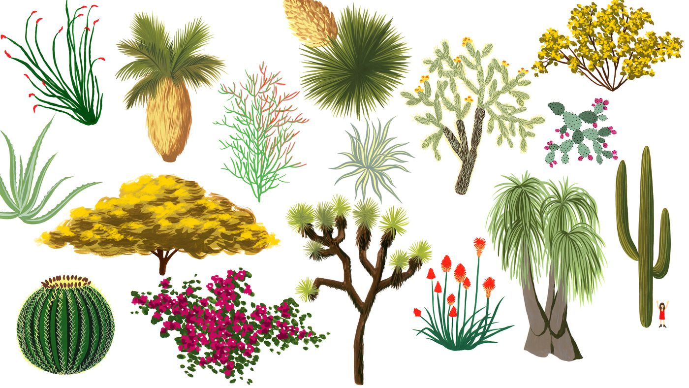 Dove despite the damage that can occur to property and people, good things can come out of forest fires, too. California Desert Plants An Illustrated Guide Curbed La