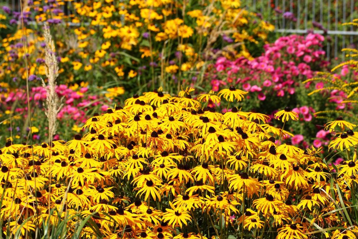7 Fall Flowers To Plant This Autumn This Old House