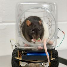 Image result for rats in tiny cars