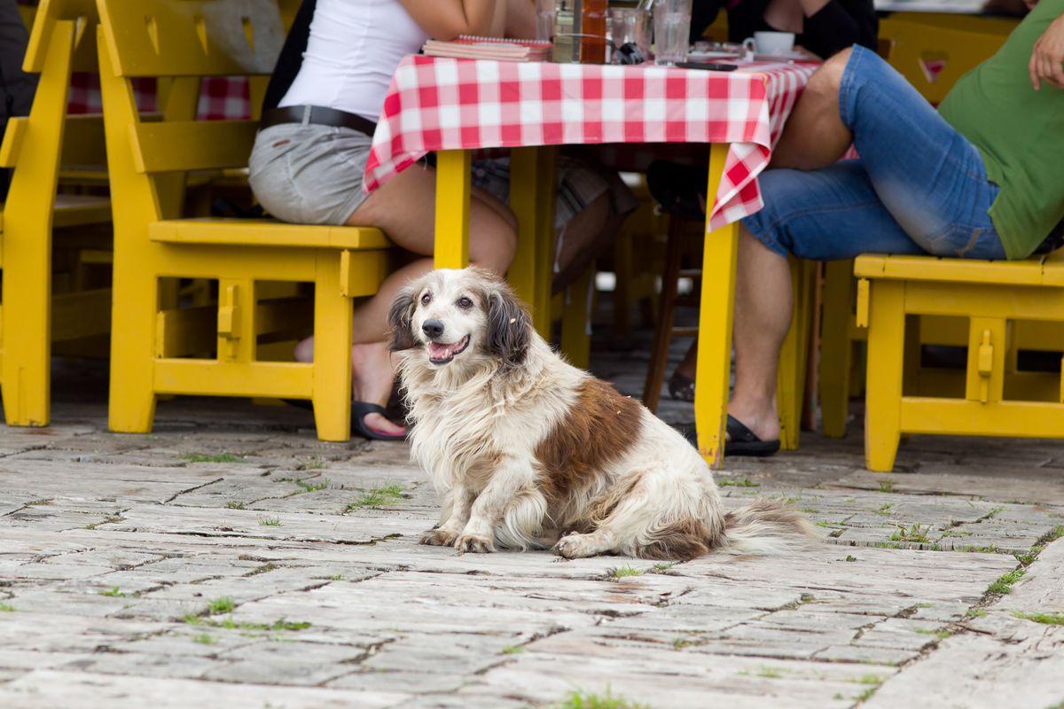 ann arbor restaurants unveil dog