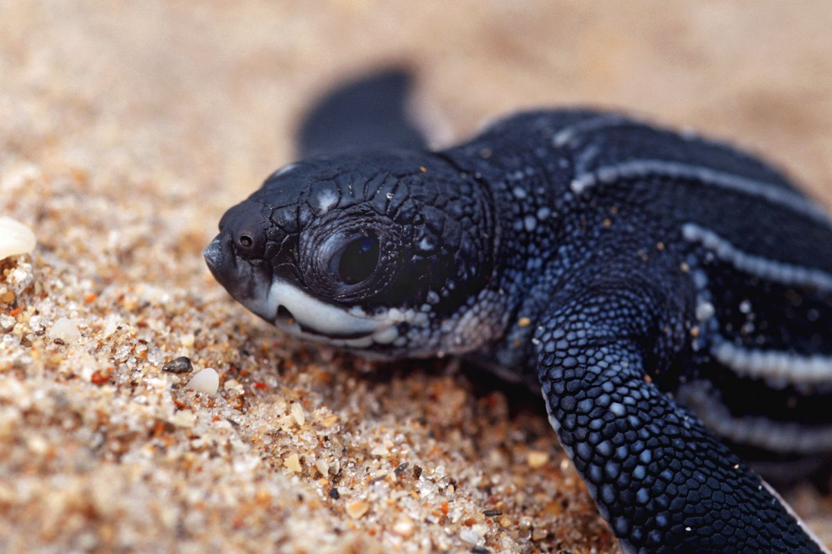 The Endangered Species Act Trump S New Rules Weaken