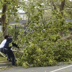 Volunteers remove a tree blocking 900 West in Salt Lake City on Tuesday, Sept. 8, 2020. High winds brought the branches down.