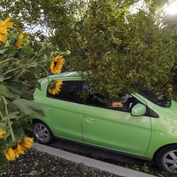 A tree that was felled by high winds rests on a car in Salt Lake City on Tuesday, Sept. 8, 2020.