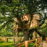 Treehouses That Are Nicer Than Your House This Old House