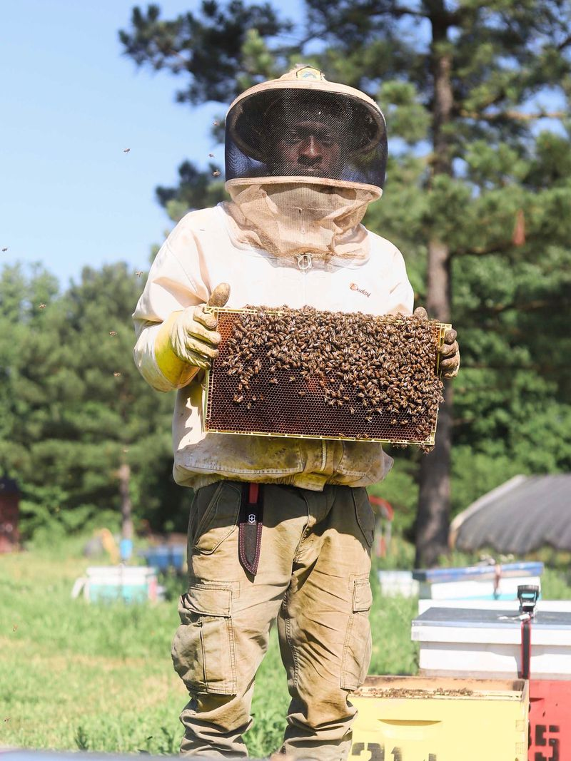 Man in a beekeeping outfit holding up a rectangle screen full of bees.