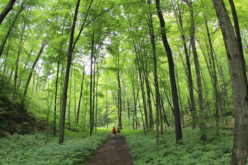Two figures walk down a dirt trail while surrounded by lush greenery and tall trees.