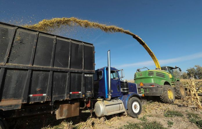 Chopped corn that will be used to feed the cows at Ron Gibson's dairy farm in Ogden is collected in a truck in Hooper, Weber County, on Friday, Oct. 9, 2020. Even before COVID-19 issues decimated dairy farmers, Gibson's wife talked him into starting a corn maze, and earlier this year he decided to use hundreds of acres of his land in Ogden to grow onions, tomatoes and potatoes in an effort to adapt and survive so his son can follow him into farming.