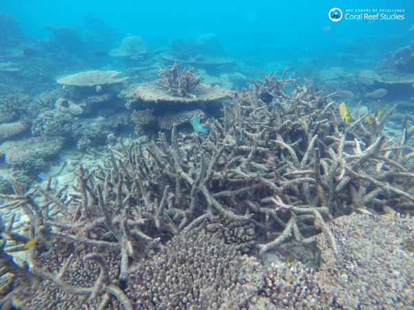 To keep the Great Barrier Reef alive, the oceans must be ...