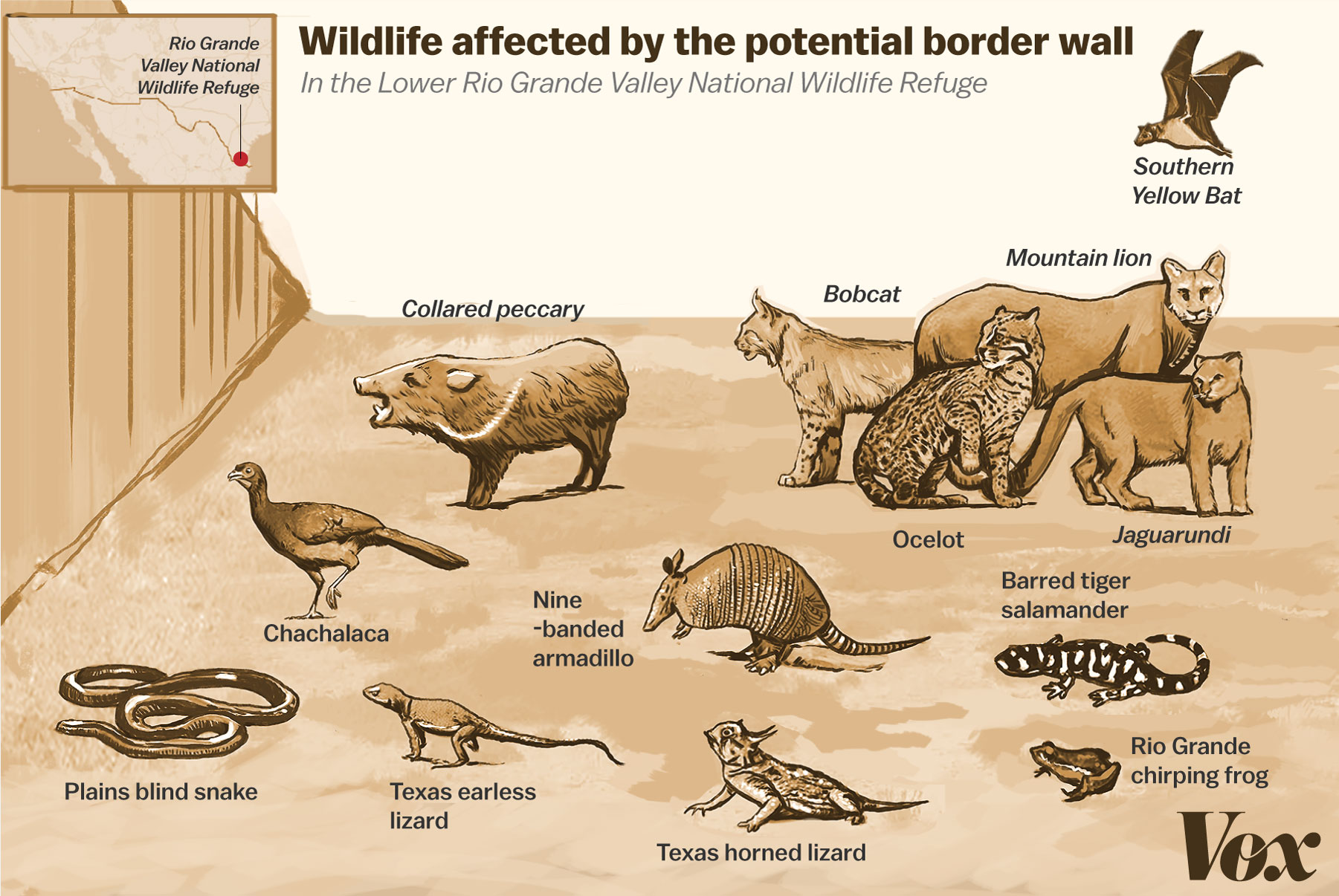 The Ecological Disaster That Is Trump S Border Wall A