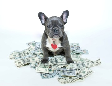 Cost Of Owning A Dog: Vaccines are the most with puppies because of boosters.