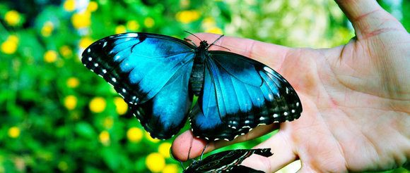 The Butterfly (Inspirational Short Stories)