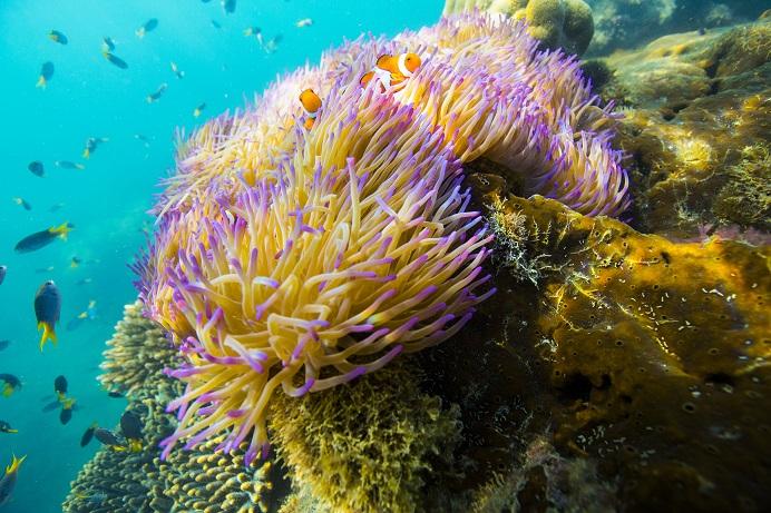 Vive como Dory con Airbnb, en la Gran Barrera de Coral australiana - airbnb-great-barrier-reef-coral-nemo
