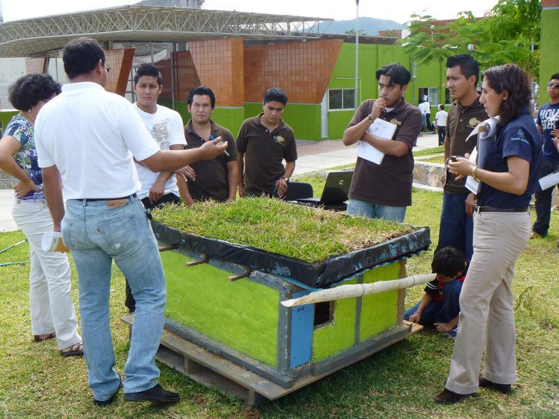 Crean techos verdes que disminuyen temperatura de las casas en zonas de extremo calor - techos-verdes-3-800x600