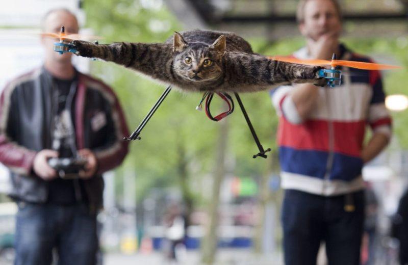 'Orvillecopter', el verdadero gato volador drone - 0zknj7g-800x520