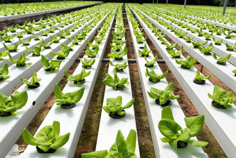 """Implementan """"Economía social solidaria"""", genera conocimientos de sustentabilidad en Pymes - huertos-sustentables-800x534"""