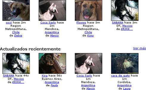 Petflog, Crea un Fotolog para Tus Mascotas - fotolog-mascotas