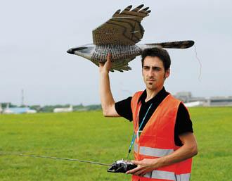 falco robot Halcón Robot, para espantar pajaros del aeropuerto