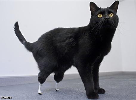 Oscar, el gato biónico - oscar-gato-bionico