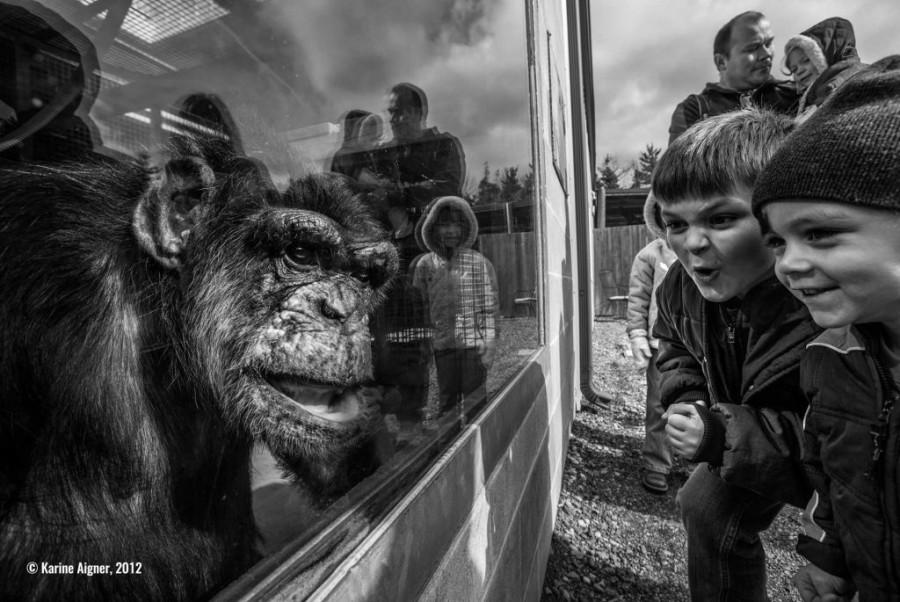 Anuncian los ganadores del primer concurso de fotografía de conservación - karine-aigner-e1447532823659