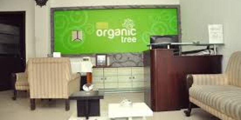 Organic Tree Salon
