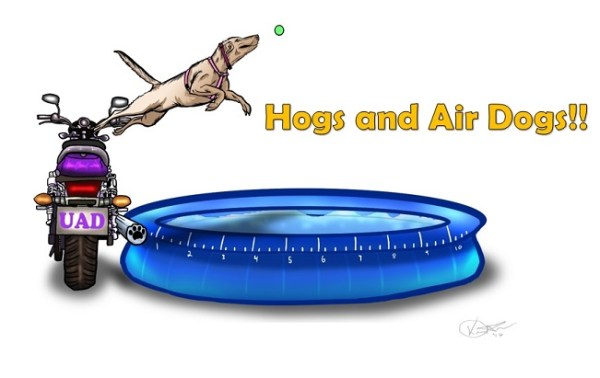 Hogs and Air Dogs!! - WINK NEWS