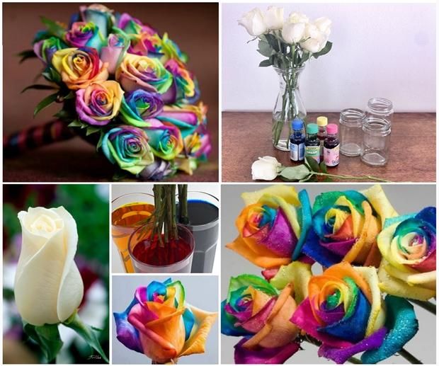 Wonderful DIY Beautiful Rainbow Roses