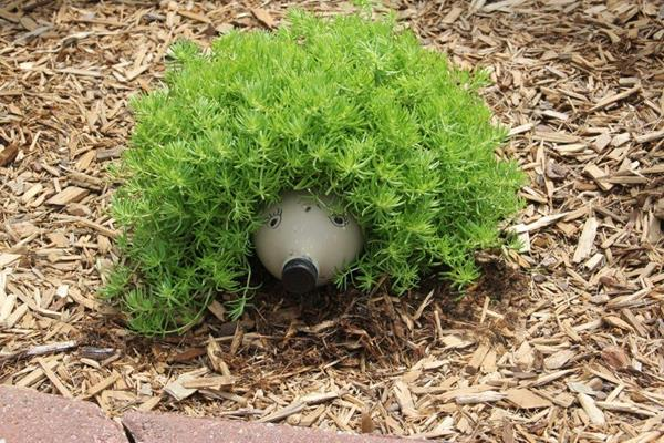 hedgehog_planter