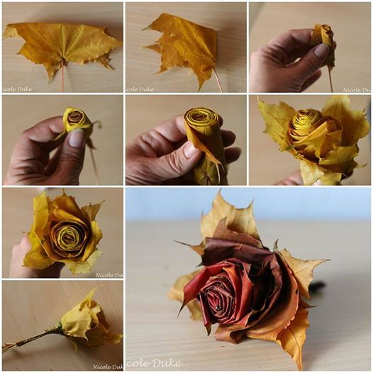 maple leaf rose