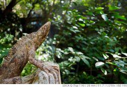 Leica_Q_Test_WORLDTRAVLR_NET_IMAEDIA_DE-1000661