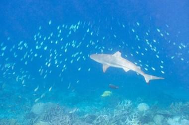 leica-x-u-113-unterwasser-15